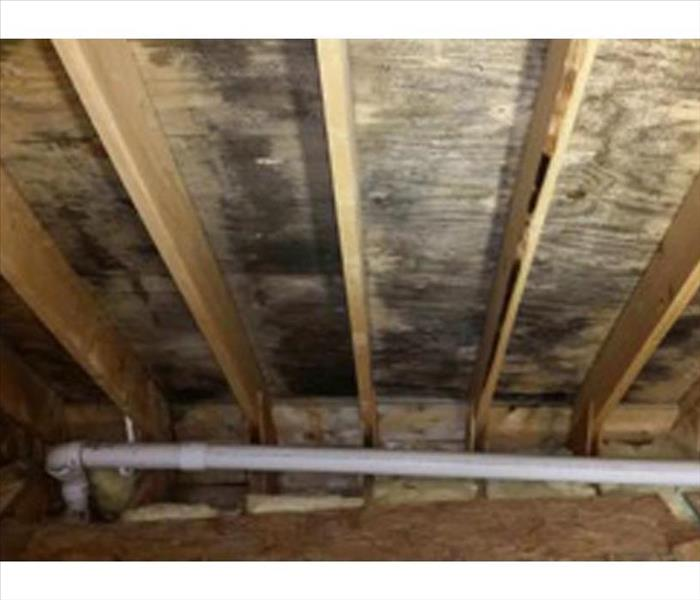 Mold Damage in New Orleans