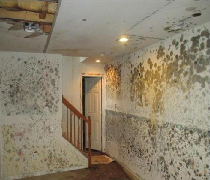 New Orleans Mold Damage