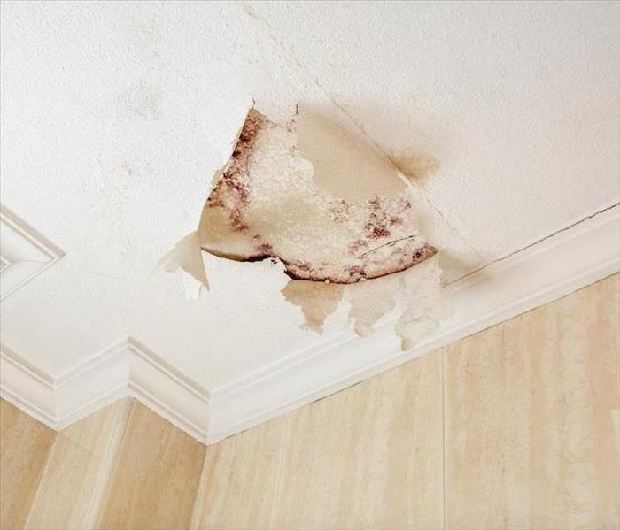 Why SERVPRO Did You Know That a Mold Infestation in New Orleans can Spread Within Hours?