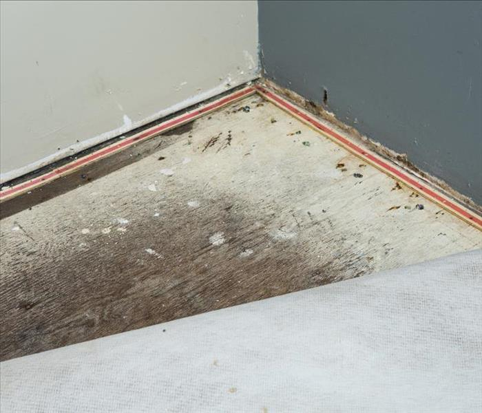 Why SERVPRO SERVPRO, Yes for Rapid Water Removal after a Water Loss in New Orleans