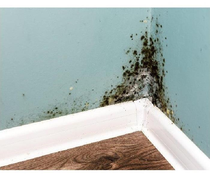 Mold Remediation How Professionals Remove Mold FromYour New Orleans Home