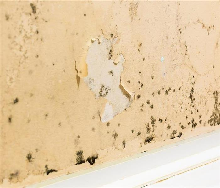 Mold Remediation Technicians In New Orelans Discuss Mold Damage