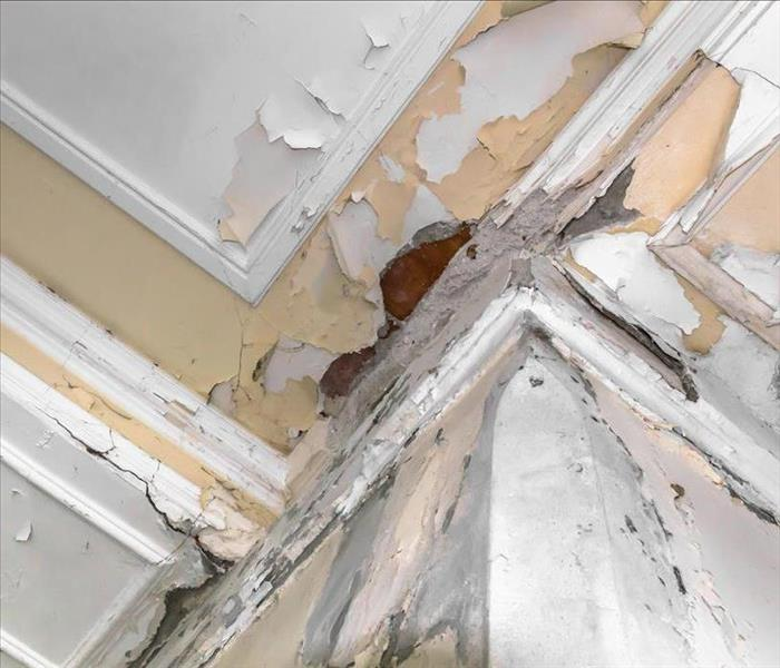 Mold Remediation Taking the Right Actions after a Mold Damage Experience in New Orleans