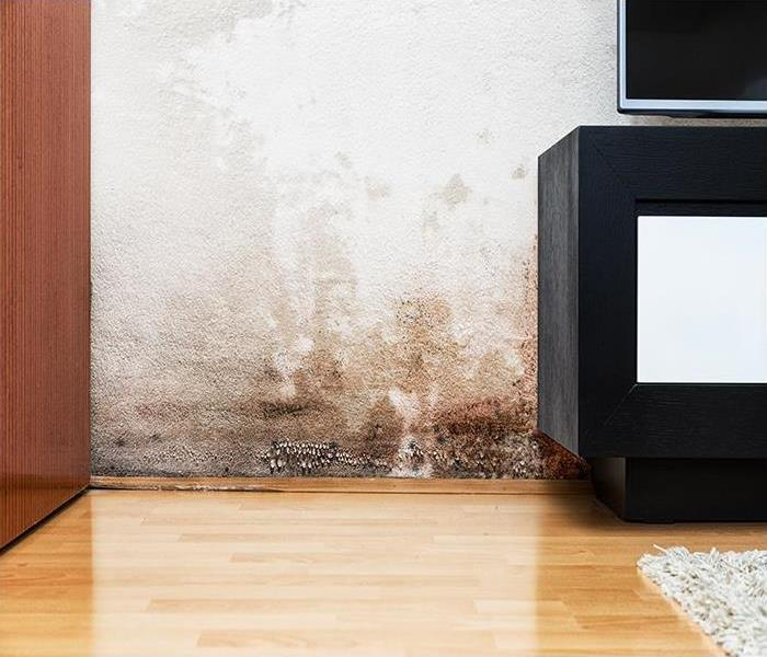 Mold Remediation The Surprising Secret To Dealing With Mold Damage In New Orleans