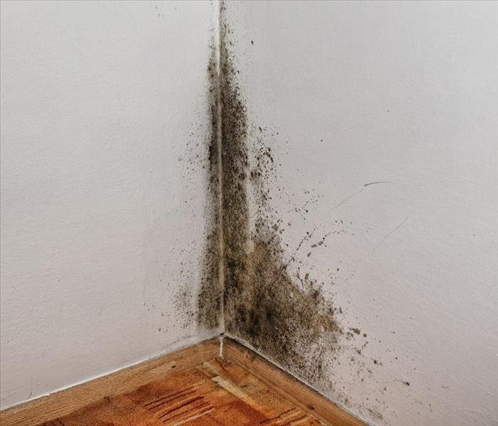 Mold Remediation How to Deal with Mold Damage in Your Kenner Home